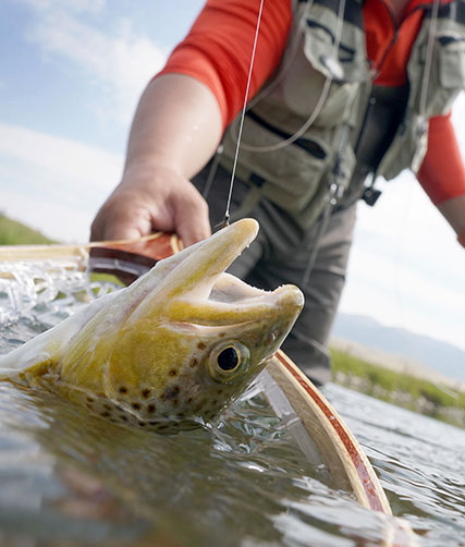 montana fishing guided vacation nature outdoors